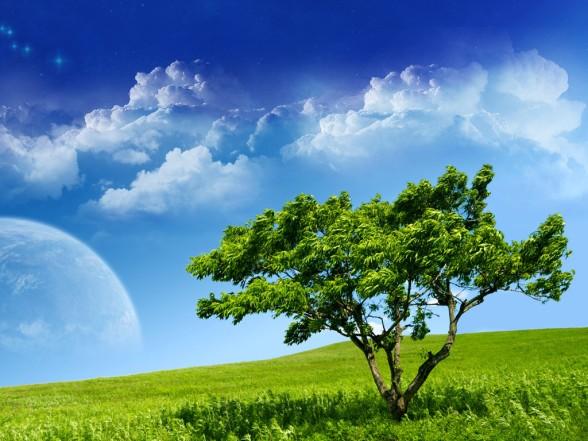 cây và cỏ